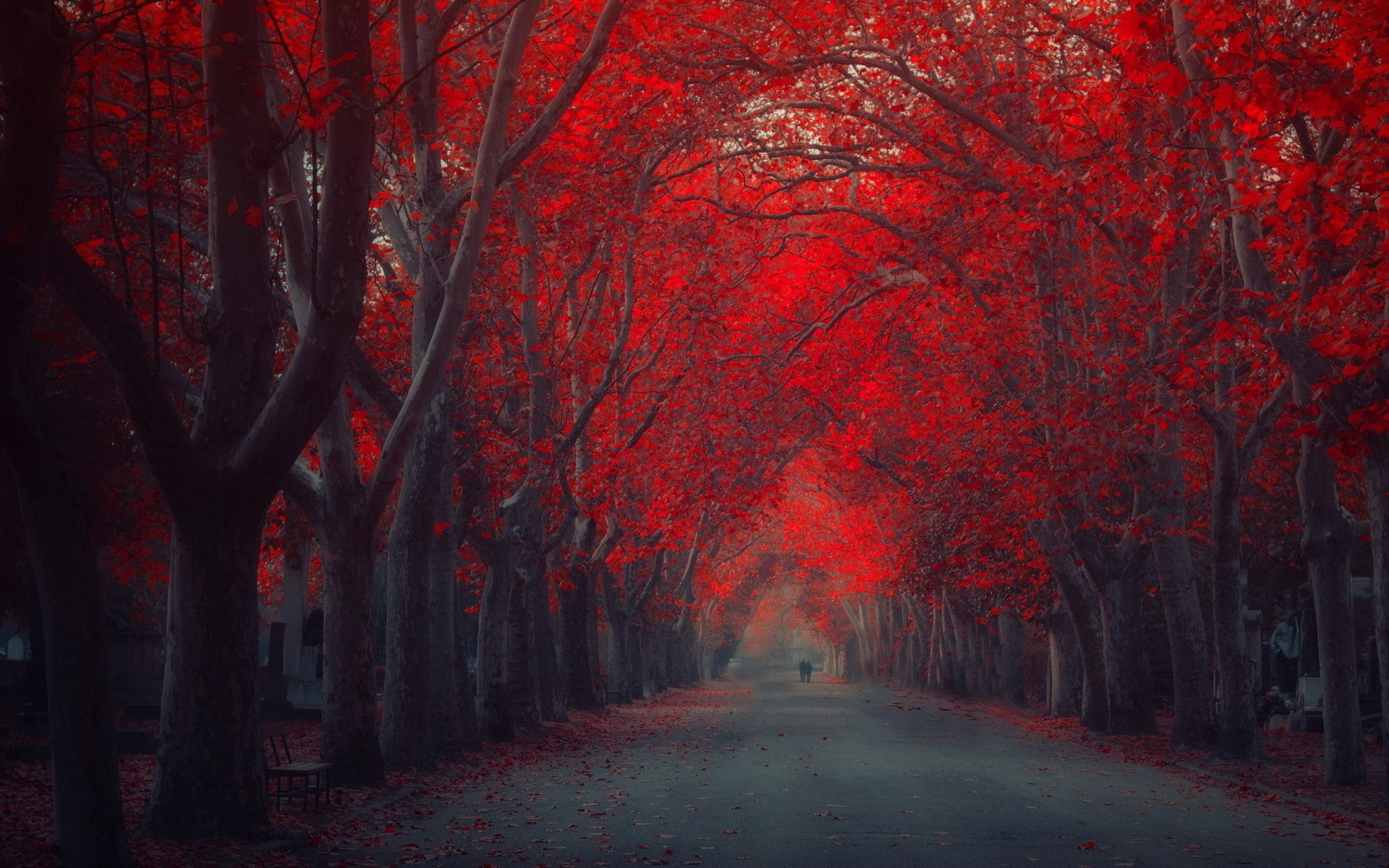 Color Red In Nature