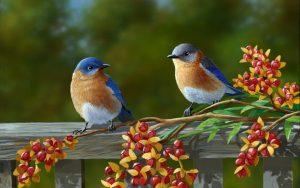 birddreams5