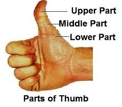 palm-reading-the-thumb