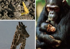 Affectionate-Animal-Communication